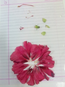 Dissected Hibiscus flower