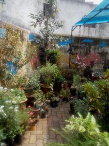 SSRVM school's garden soon to be transformed into a butterfly garden