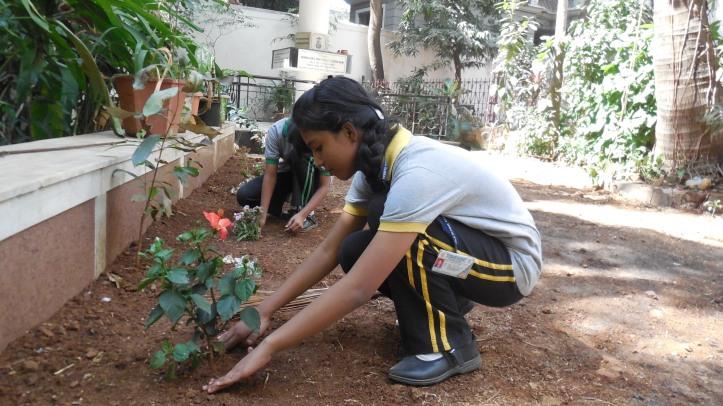 Rashi planting sapling in Kamala High School