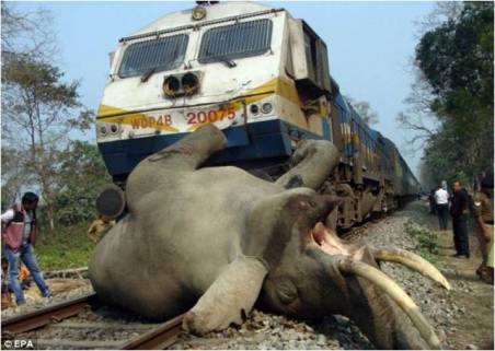 Elephant killed by a speeding train inside a nature reserve in North- East India