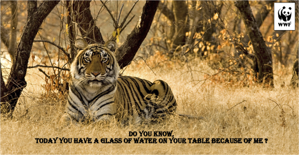 Source: http://www.nathab.com/uploaded-files/carousels/TRIPS/India-Tigers-Photo/Asia-India-Photo-2-tiger.jpg